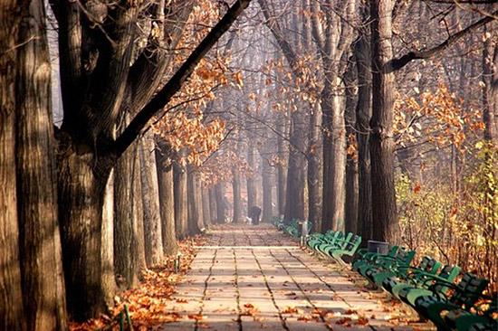 Cismigiu Park
