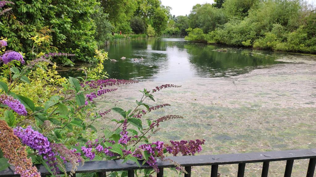 Waddon Ponds at the entrance Flip Out London's premises